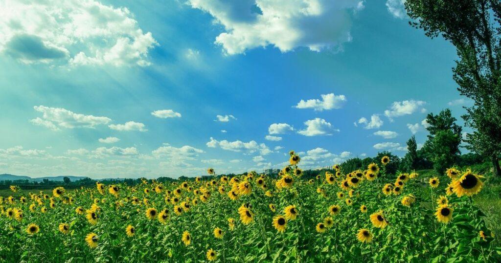 北海道の夏の暑さは?エアコンは必要?